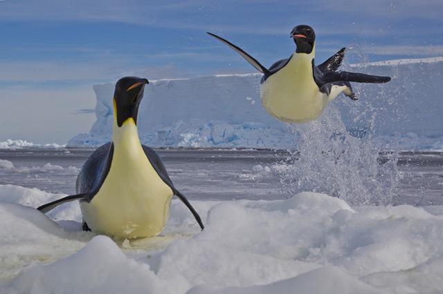 Paul-Nicklen-Canada-Frozen-moment