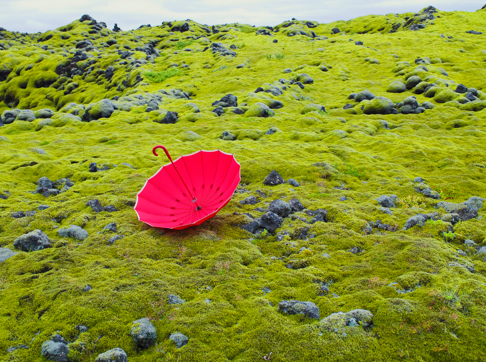 Blend-Images-Pantone-Greenery-Umbrella-In-Field-Blendimages